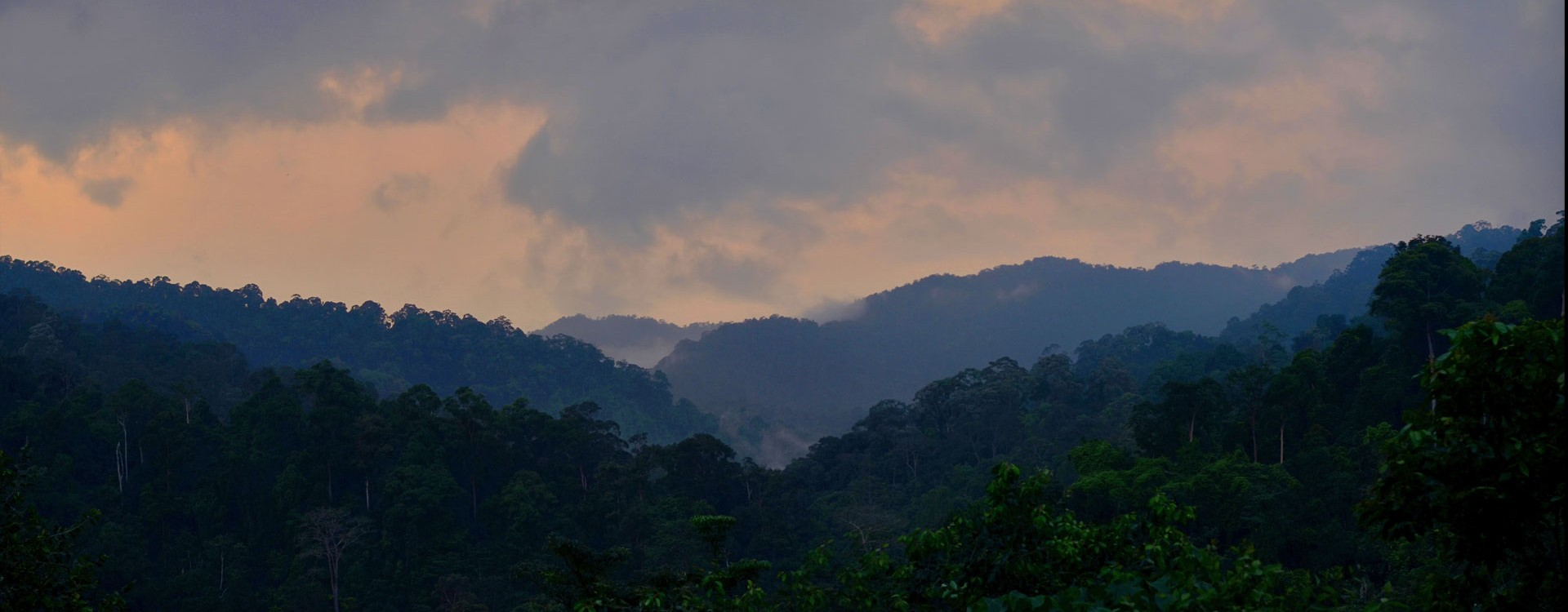 dawn on Berembun forest reserve. Clouds cling to the hills on cool mornings and after rains