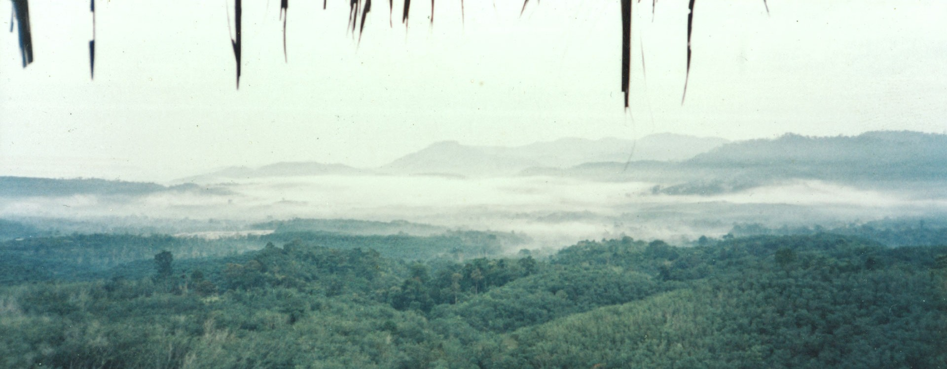 Circa 1985. The view from our house at the time. Notice the grass roof? Tembusu House now sits on the exact spot